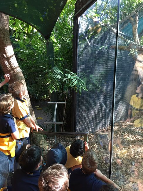 Year 4 Boys Discover The Perth Zoo After Dark Ccgs